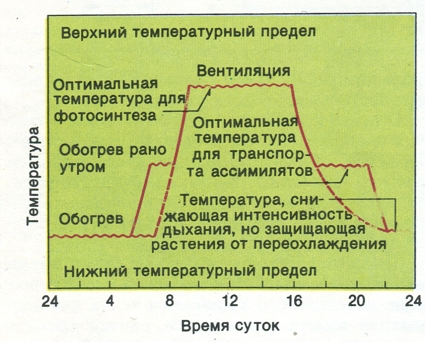 Схема дифференцированного