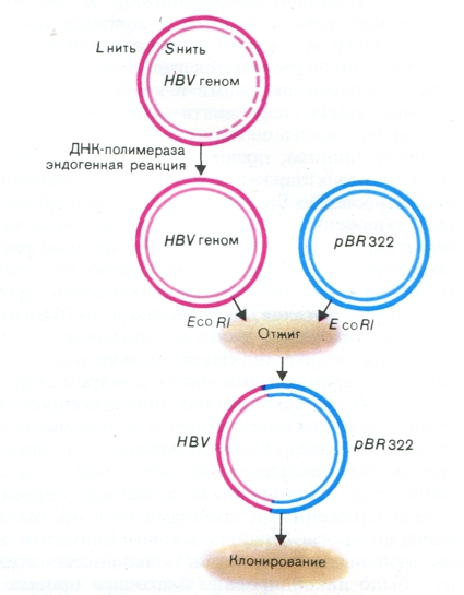 Схема генно-инженерных